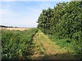 TL3781 : Former Chatteris to St Ives LNER railway northwards by Andrew Tatlow