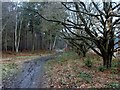 SK6671 : Walesby Forest footpath by Andrew Hill