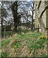 Dist:0.4km&lt;br/&gt;Snowdrops and narcissi at the base of St Andrew's Church tower, with Dairy Farm in the background.