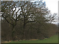 TQ6985 : Trees waiting for spring, Langdon Hills Country Park by Roger Jones