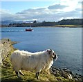 NM4439 : Posing by the pier : Week 13
