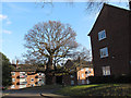 TQ4077 : Tree in the centre of Beaconsfield Close by Stephen Craven