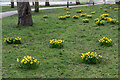 Dist:0.1km&lt;br/&gt;These daffodils were near the Aldermans Hill entrance not far from The Triangle.