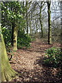 SP8924 : Path through the woods by Philip Jeffrey