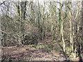 SU7990 : Thick scrub on Moorend Common by Stuart Logan