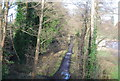 TQ0045 : Wey South Path by N Chadwick
