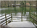 SE8584 : Tranquil pond near High Paper Mill Farm by Pauline Eccles