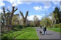 SP2965 : Lopped trees each side of the path, St Nicholas Park by Robin Stott