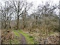 SJ8148 : Path through Watermills Wood by Christine Johnstone