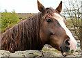J5252 : Horse, Killyleagh : Week 18
