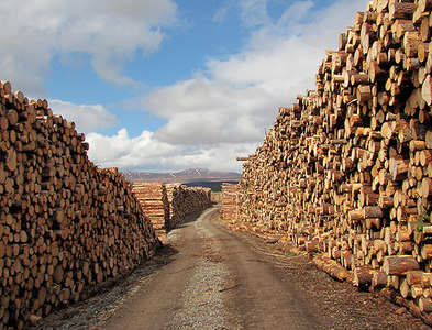 NN5453 : Timber stacks by William Starkey