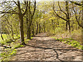 SD5907 : Footpath in Haigh Country Park by David Dixon
