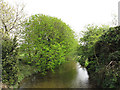 TQ5074 : River Cray at Hall Place by Stephen Craven