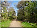 SJ9092 : Trans Pennine Trail, Brinnington (1) by John Topping