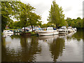 TQ7557 : River Medway Allington Marina by David Dixon