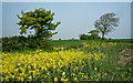 TL1588 : Fields above Red Hill Farm by Kim Fyson