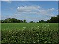 SU8372 : Fields near Billingbear by Alan Hunt