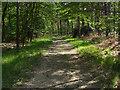 SU8864 : Track, Swinley Forest by Alan Hunt