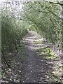 TL6340 : Tunnel Of Bushes by Keith Evans