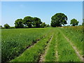 SJ8158 : South Cheshire Way east of Boden Hall by Richard Law
