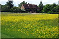 SP9021 : Buttercups at Manor Farm by Philip Jeffrey