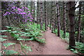 SP9634 : Path through the woods by Philip Jeffrey