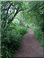 TL0638 : Greensand Ridge Walk by Philip Jeffrey