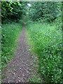 TL0739 : Path through Maulden Wood by Philip Jeffrey