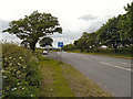 SJ6784 : Lay By on the A50 near Lymm by David Dixon