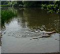 TQ2897 : Lake, Trent Park, Cockfosters, Hertfordshire by Christine Matthews