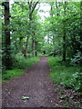 TL0234 : Path through Flitwick Woods by Philip Jeffrey