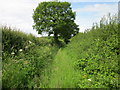 SJ4751 : Footpath to Carden by Jeff Buck