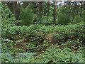 SU8665 : Caesar's Camp ramparts by Alan Hunt