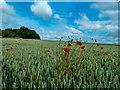 SE4839 : Sharing a field : Week 27