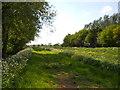 TF1607 : South Drain between Peakirk and Glinton by Paul Bryan