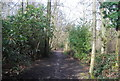 SU8549 : Blackwater Valley Path, Rowhill Reserve by N Chadwick