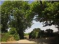 SX4062 : Ash and oak, Crooked Park by Derek Harper