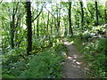 SX0788 : Woodland path, Halgabron by Maurice D Budden