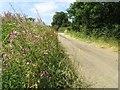 SP6509 : The Bernwood Jubilee Way near Worminghall by Steve Daniels
