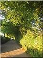 SX4170 : Lane to Todsworthy by Derek Harper