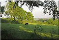 SX4170 : Cattle pasture near Todsworthy by Derek Harper