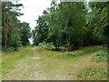 TQ2130 : Track junction, St. Leonard's Forest by Robin Webster