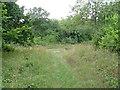 TL1681 : Aversley Wood, Pinnacle Crossing by N Scott