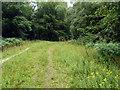 TQ2733 : Woodland track, Tilgate Forest by Robin Webster