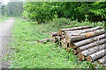SU8186 : Log pile in Homefield Wood by Graham Horn