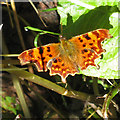 SE7567 : Comma on dock by Pauline Eccles