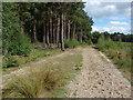 TQ0759 : Wisley Common by Alan Hunt