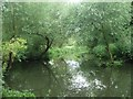 TL4354 : Willow tree overhangs across the River Cam near Byron's Pool by David Leeming