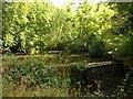 ST6376 : Artificial pond, Oldbury Stream by Derek Harper