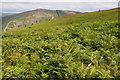 SN9664 : Bracken hillside above the Wye valley by Philip Halling